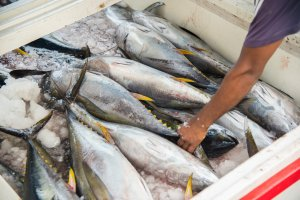 Maldive cucina tonni