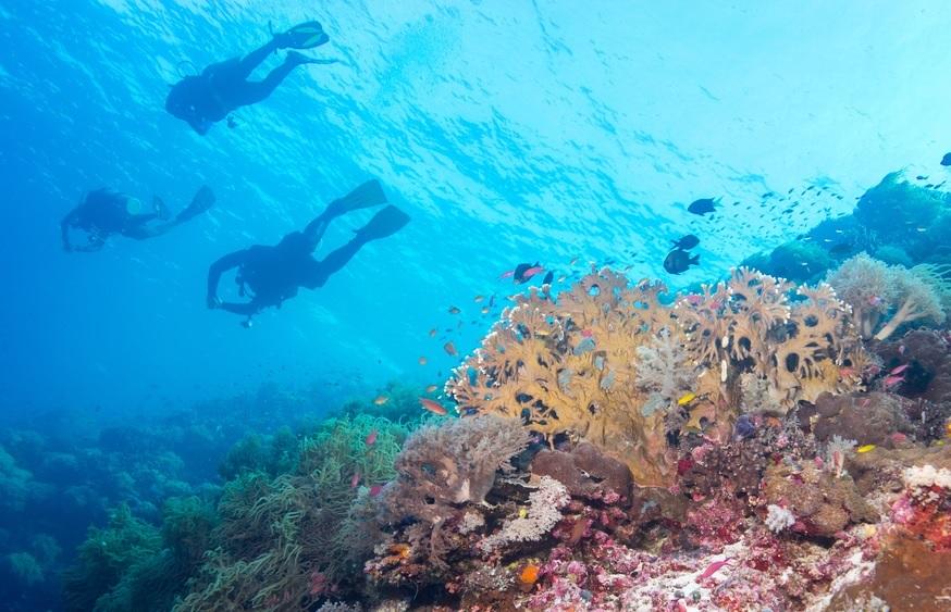 il reef di Tubbataha, Filippine, è il paradiso delle immersioni