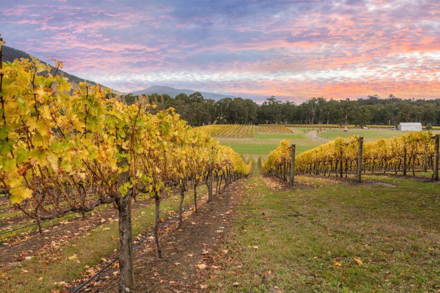 South Australia Barossa Valley