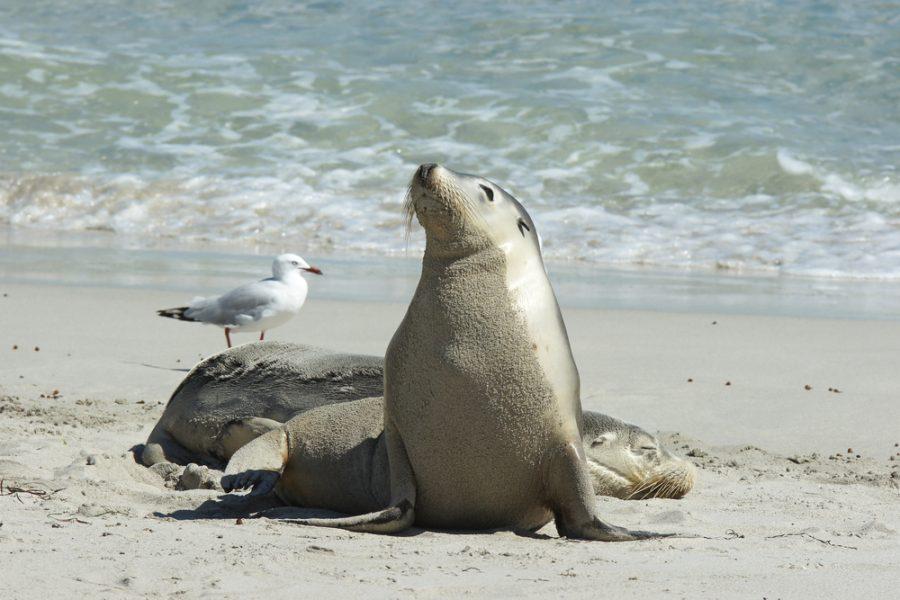 South Australia Kangaroo Island