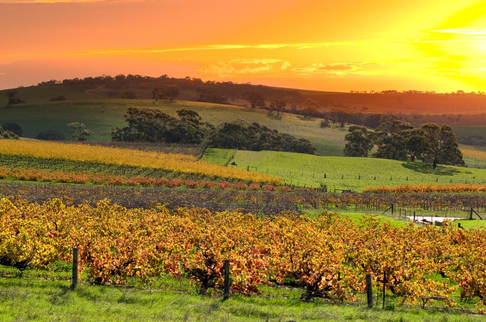 Una veduta della Barossa Valley, South Australia