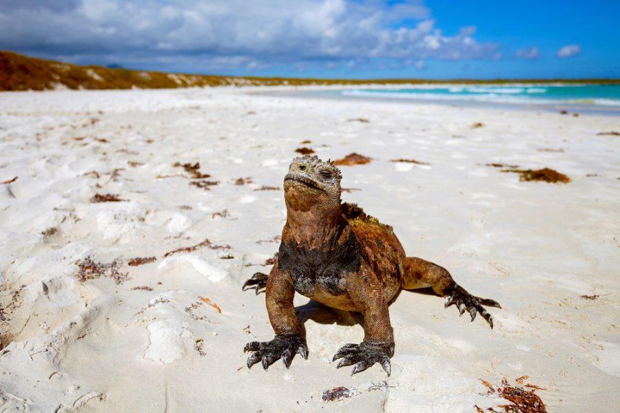 Viaggi Isole Galapagos ecuador