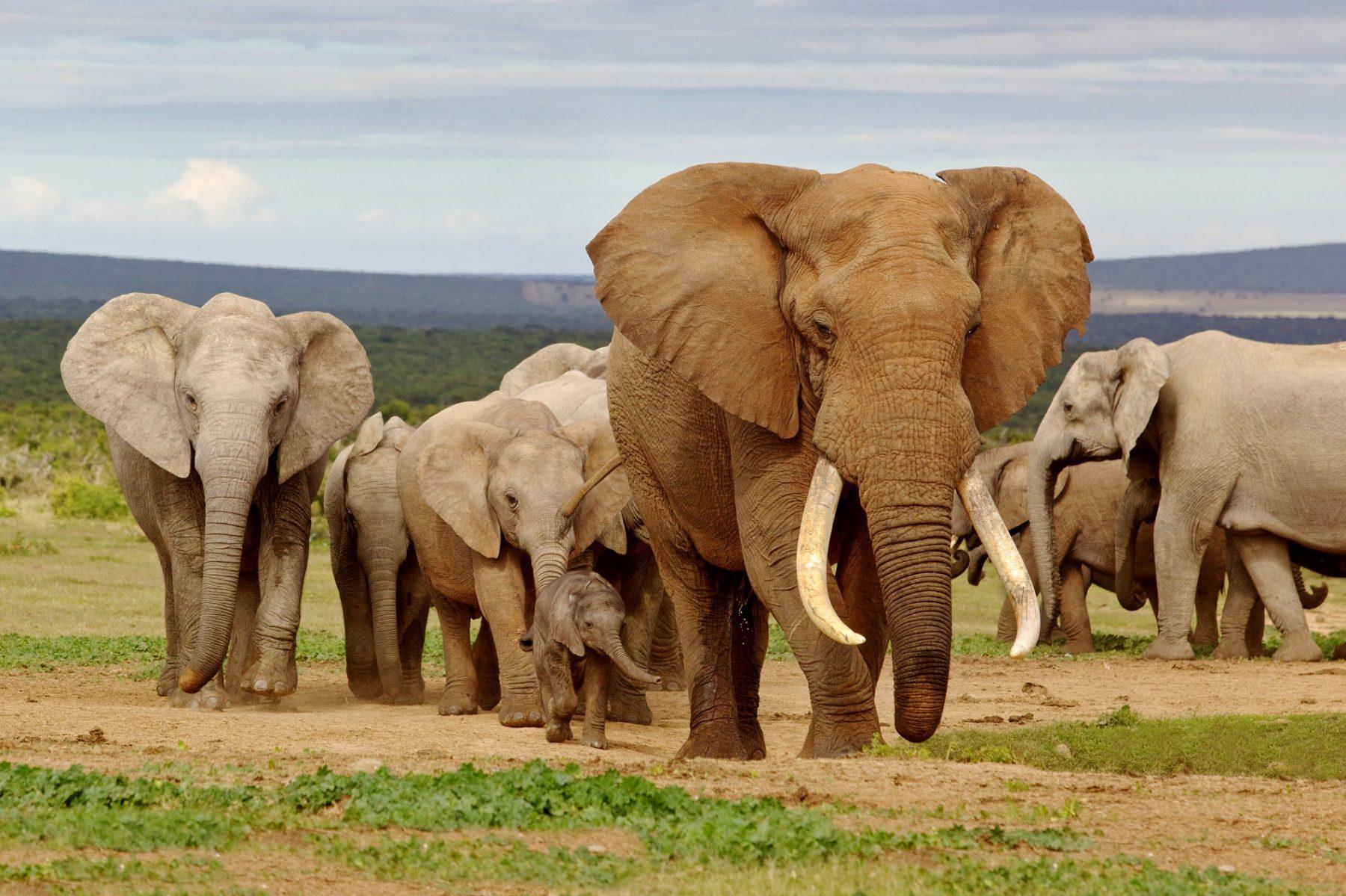 Viaggio Africa Australe
