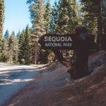 California on the road sequoia
