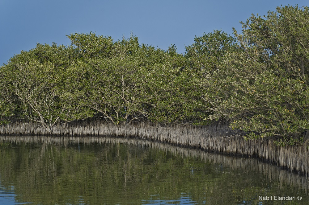 Cosa vedere in Qatar Mangrovie