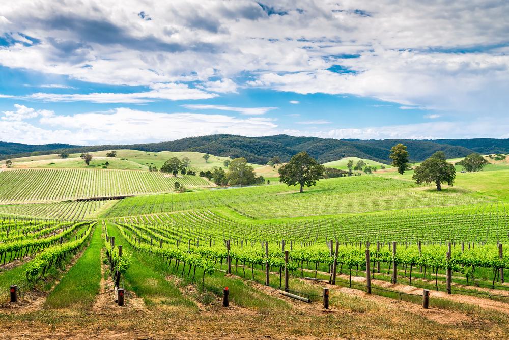 Vino in south australia Barossa Valley