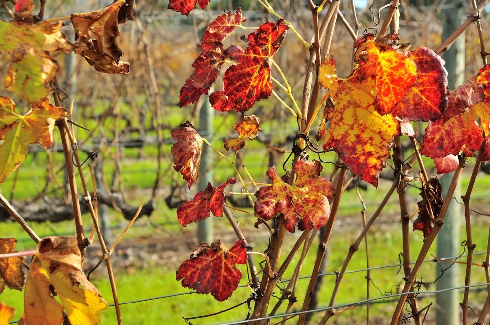 vini australiani margaret river