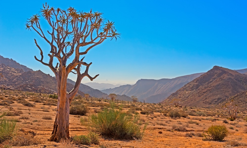 Patrimoni UNESCO del Sudafrica Richtersveld Cultural and Botanical Landscape