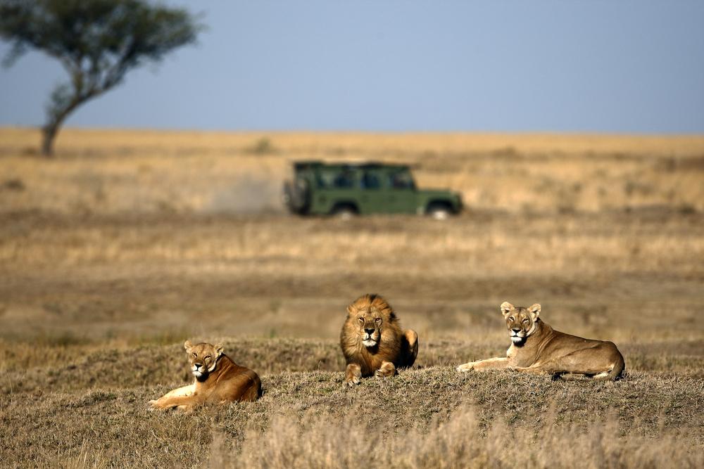 Viaggio Safari