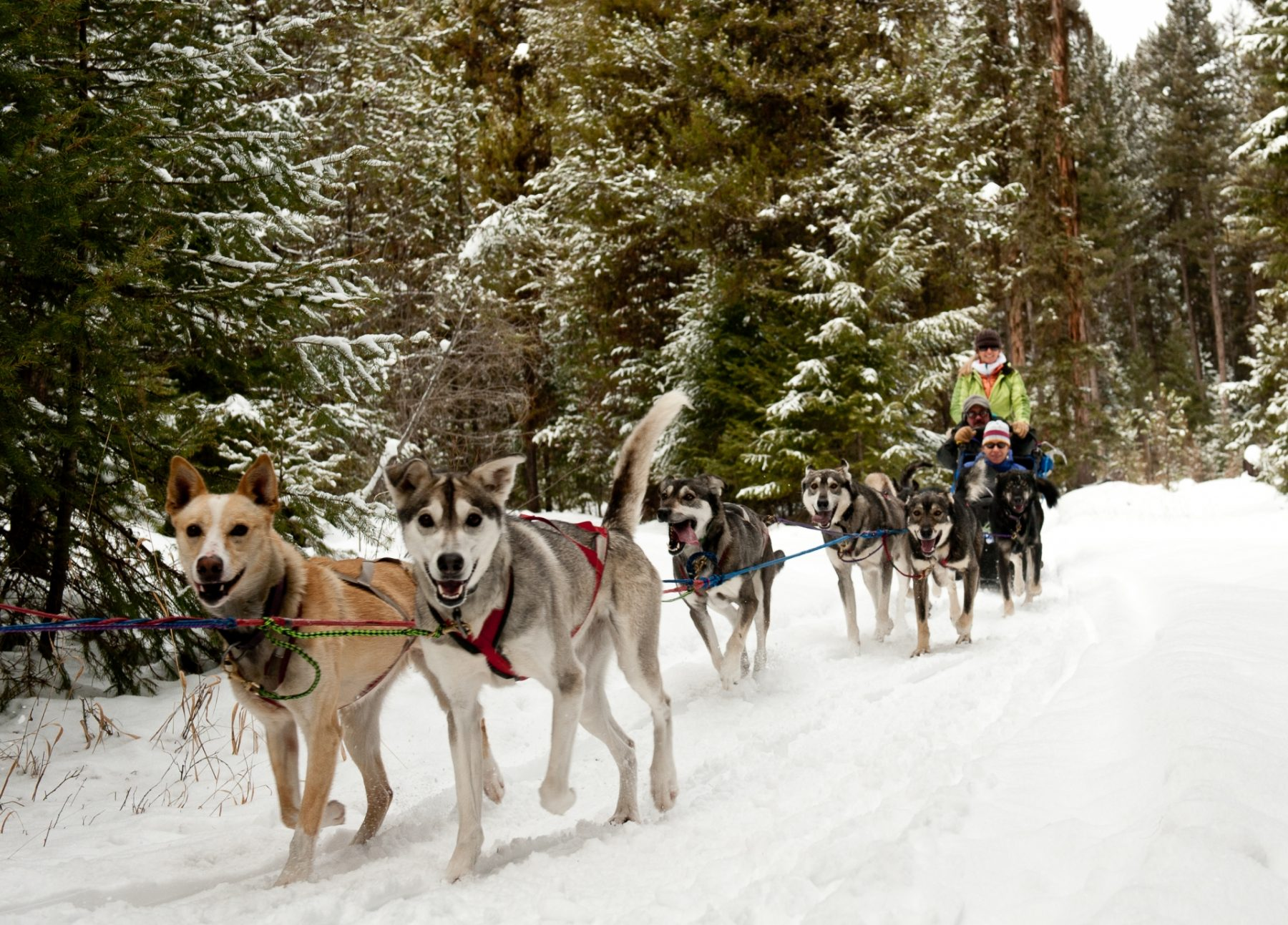 Viaggio nelle Rocky Mountains invernali Winter Woods Dog Sled Tours, Whitefish
