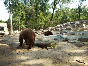 Cosa fare e vedere a Bismarck: Dakota Zoo