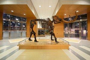 North Dakota Heritage Center and State Museum: il mastodonte d'ingresso