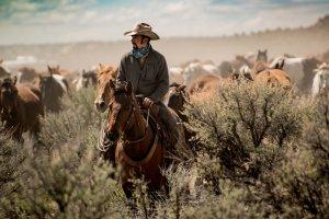 I ranch delle Rocky Mountains: il wrangler
