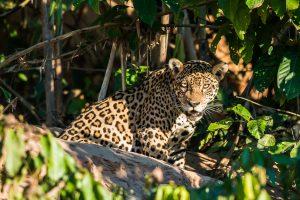 Viaggio in Sud America Amazzonia PEruviana