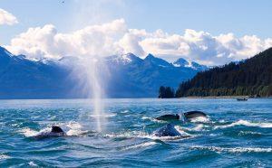 balena juneau