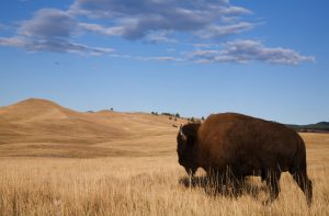 Viaggio Custer State Park South Dakota