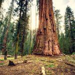Sequoia National Park viaggio in California