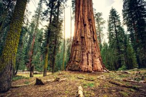 Sequoia National Park viaggio in California