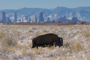 viaggio Denver e Rocky Mountains viaggio USA