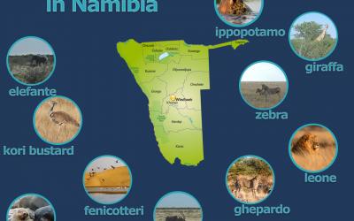 Safari Namibia Animali