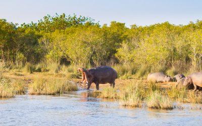 Patrimoni UNESCO del Sudafrica iSimangaliso Wetland Park