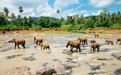 Pinnawala elephant orphanage, Sri Lanka. Shot with Canon 5D mkIII.