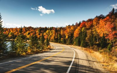 winding road in Maine