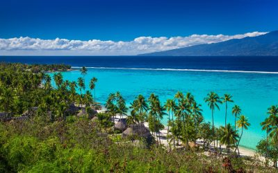 Palm trees on tropical beach of Moorea island with the view of Tahiti, French Polynesia