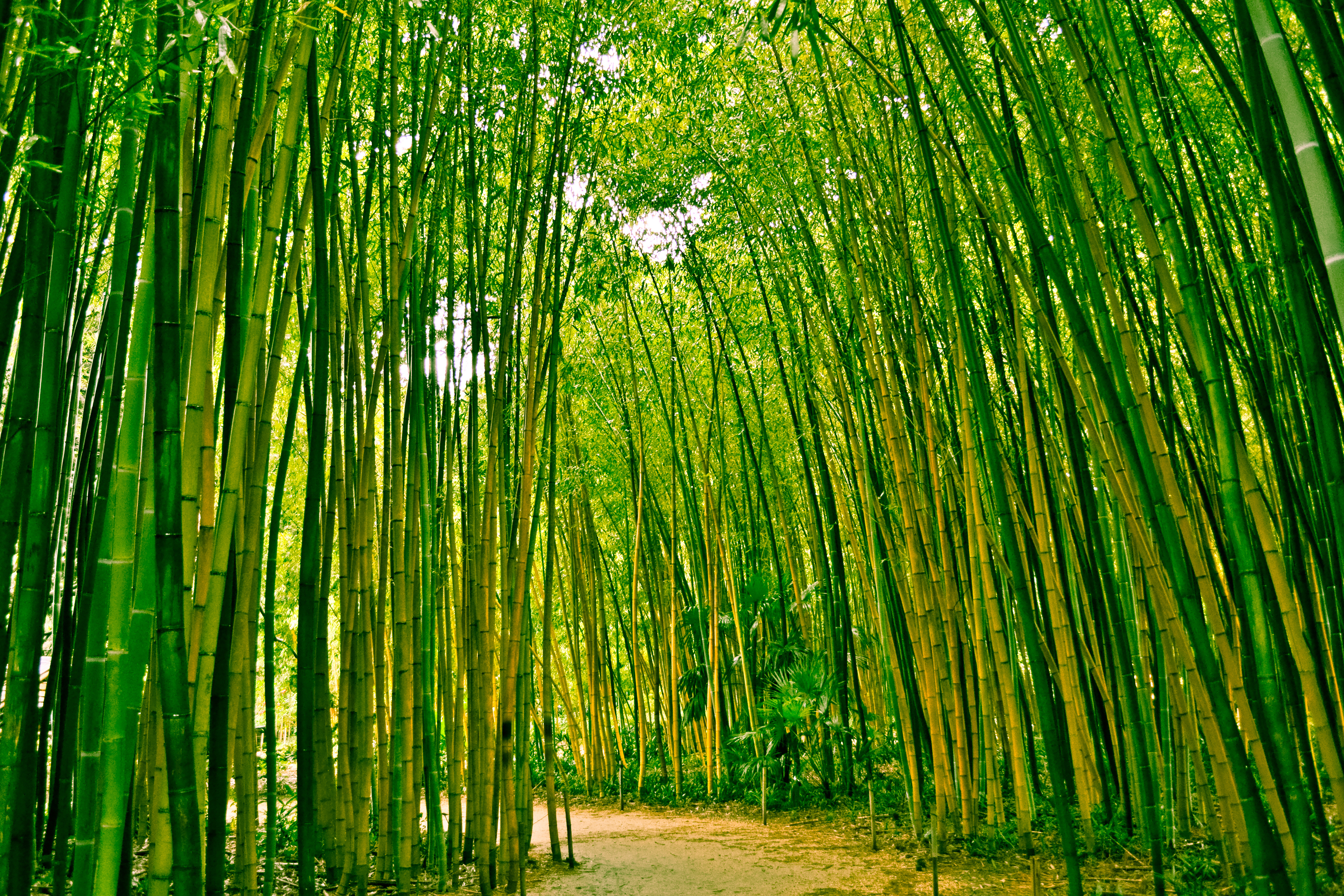bamboo_romance_south_korea