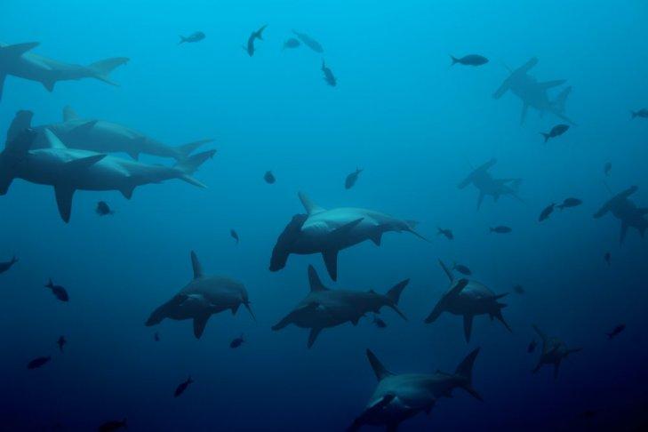 Coco Island, che immersioni con gli squali!