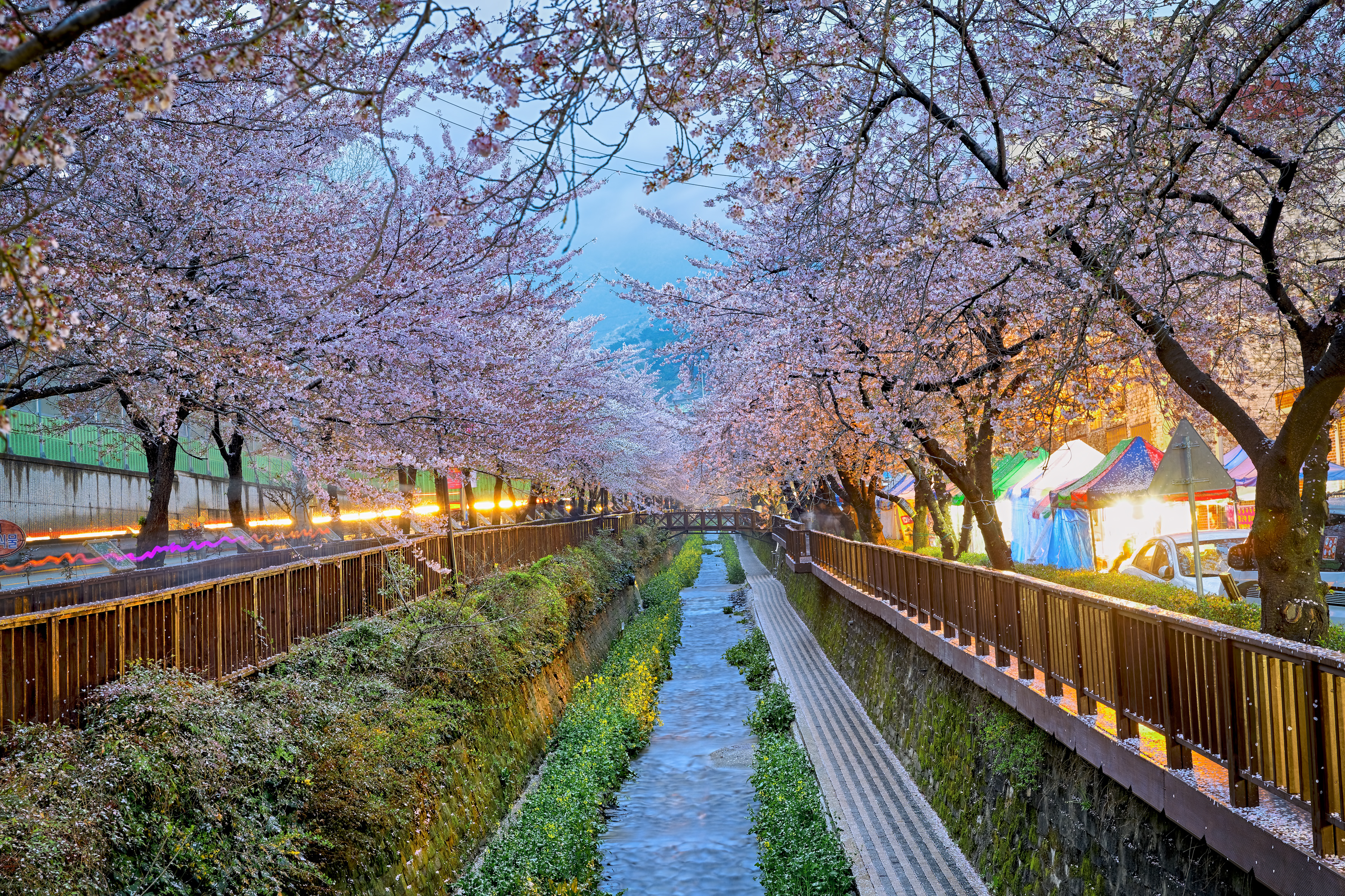 spring_romance_south_corea