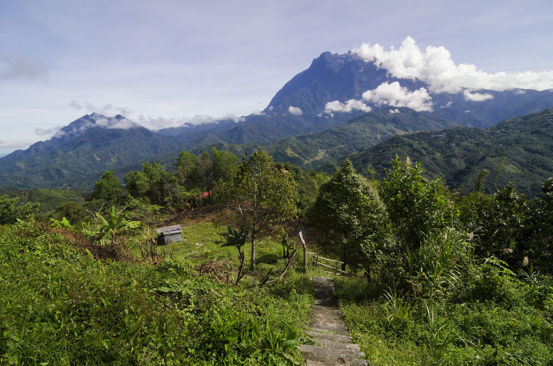 Borneo Foresta