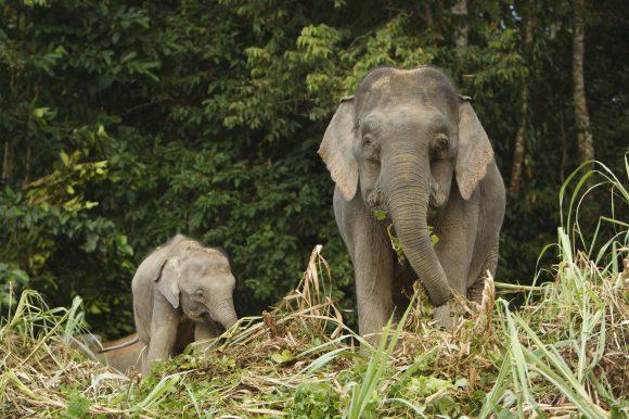 Borneo:  attraverso i misteri della giungla nera!
