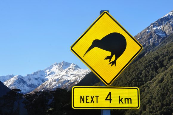 Nuova Zelanda, la terra delle creature fantastiche!