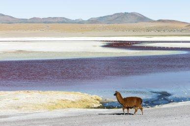 Cile, dalla Patagonia all'Atacama in moto