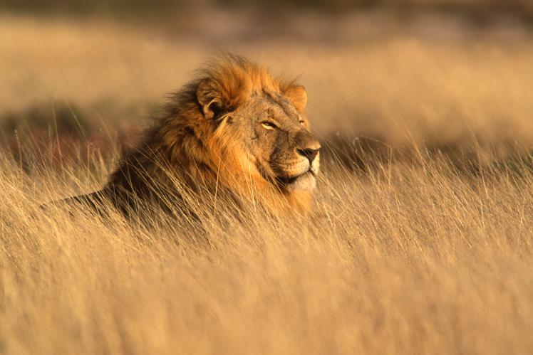 vacanza Namibia Leone