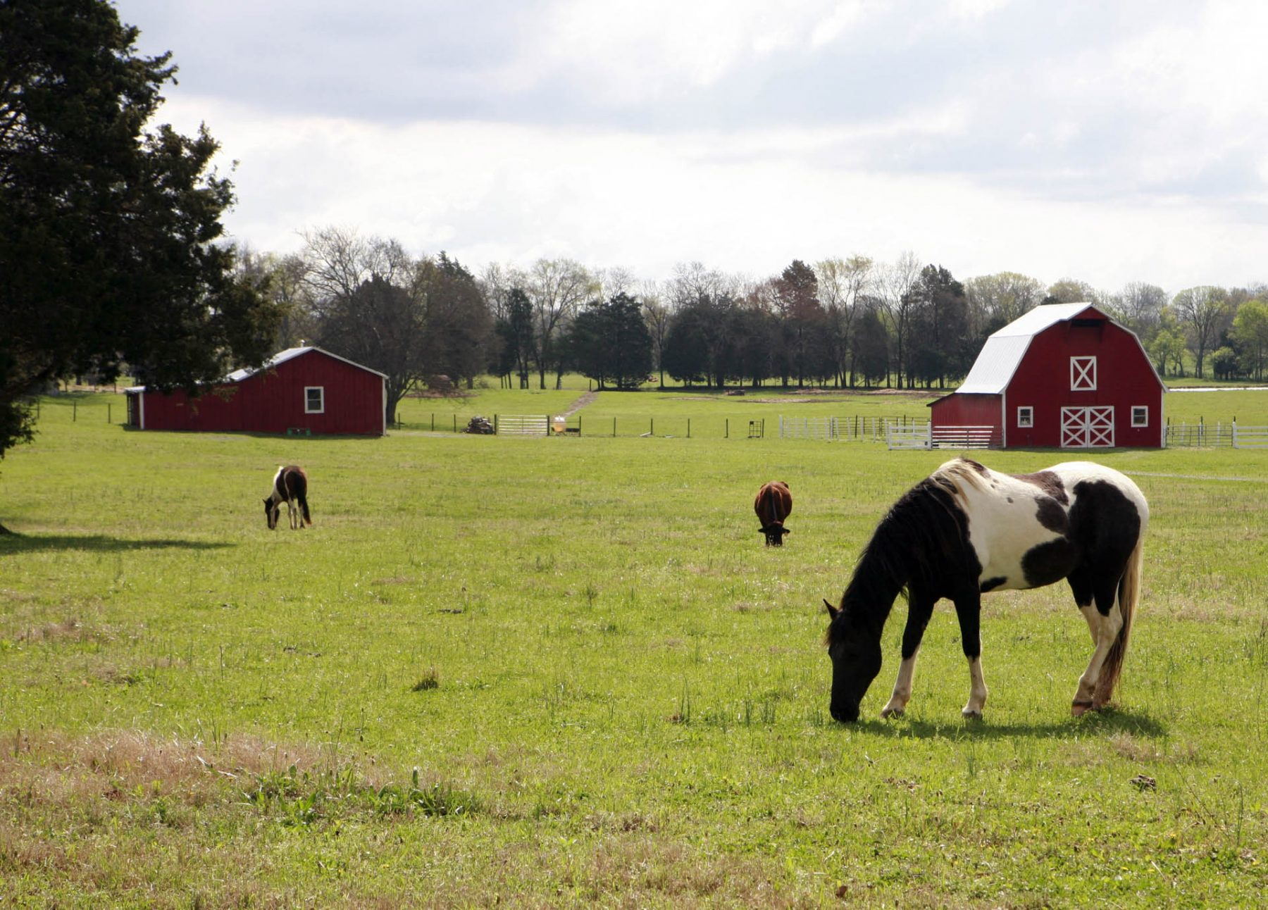 middle_tennessee_farm