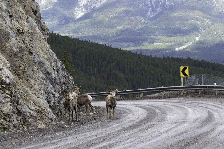 Le strade più belle delle Montagne Rocciose