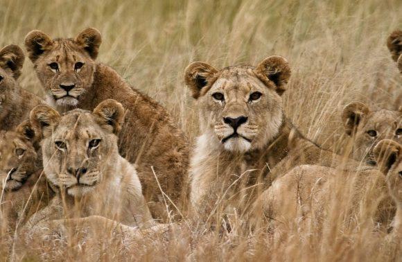 Safari Sudafrica e Seychelles