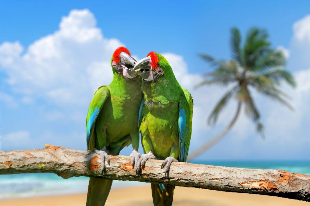 pappagalli_messico_riviera_maya