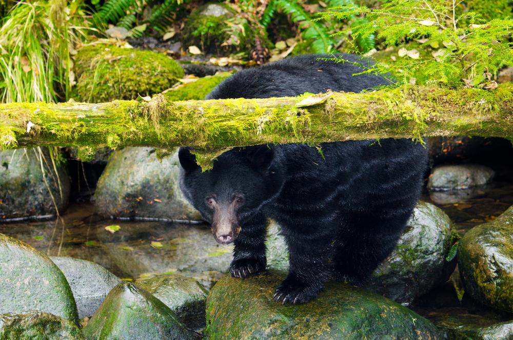 vancouver-islan_wildlife