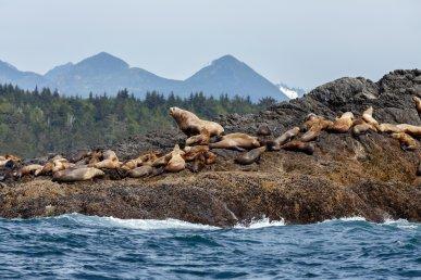 Vancouver Island: l'idea perfetta per un viaggio in Canada