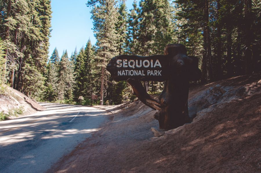 California on the road sequoia