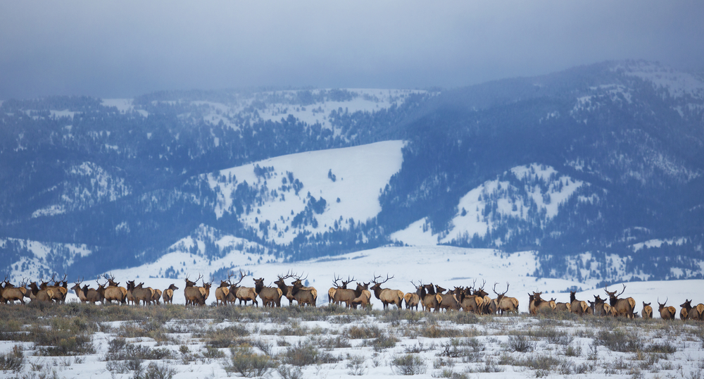 film western elk refuge django