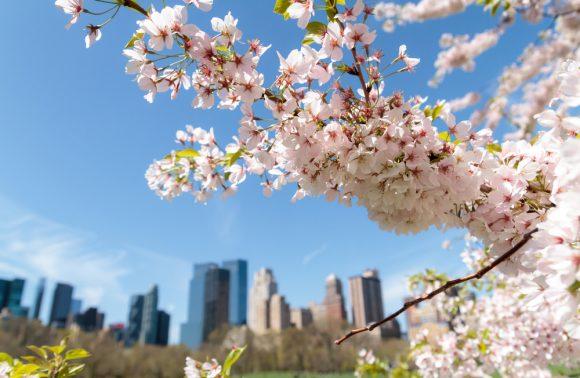 Vacanza a New York in primavera