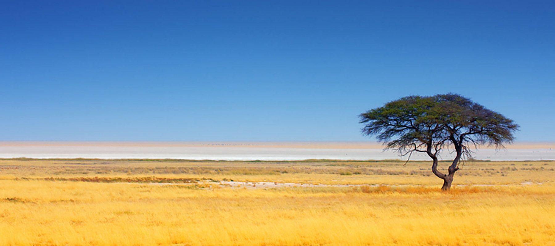 namibia_etosha