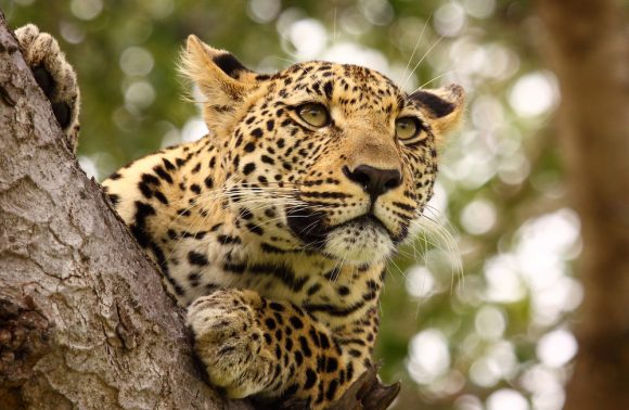 Taste of South Africa Natura Tour