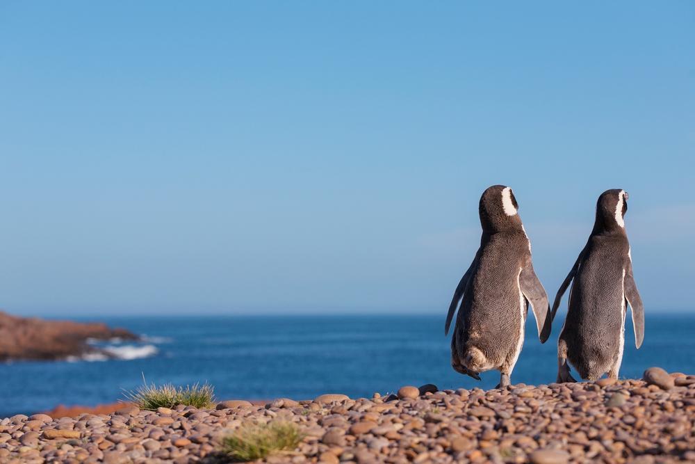 Tour Esclusivi pinguini magellano