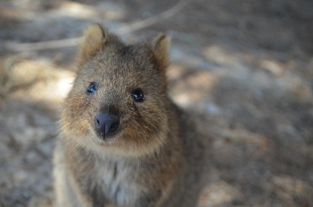 Viaggio Australia 4