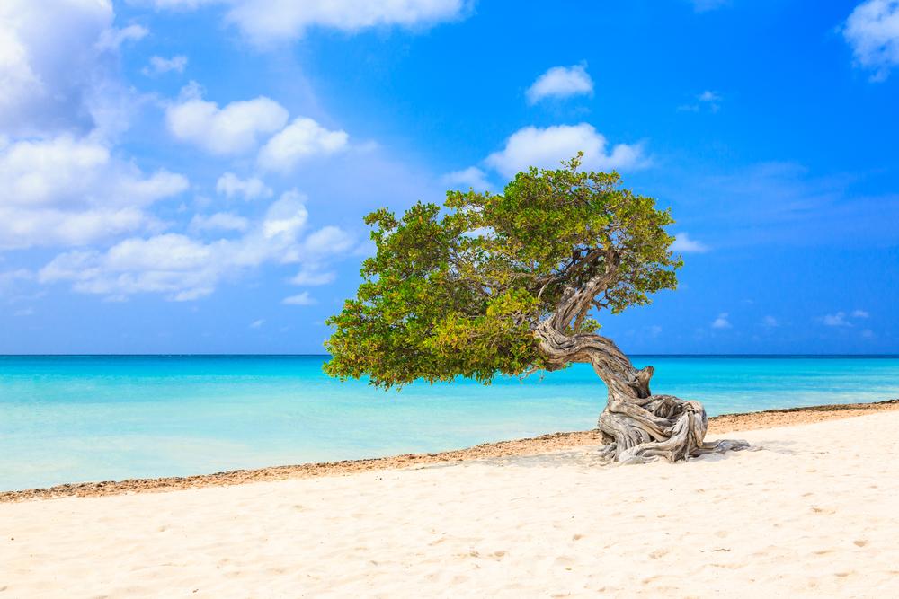 Aruba Caraibi